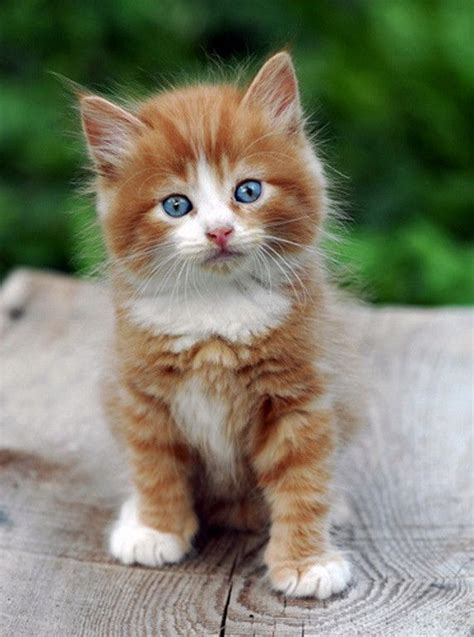 katzen entfernen garten 4598 katzen entfernen garten katzen garten gestalten nowaday
