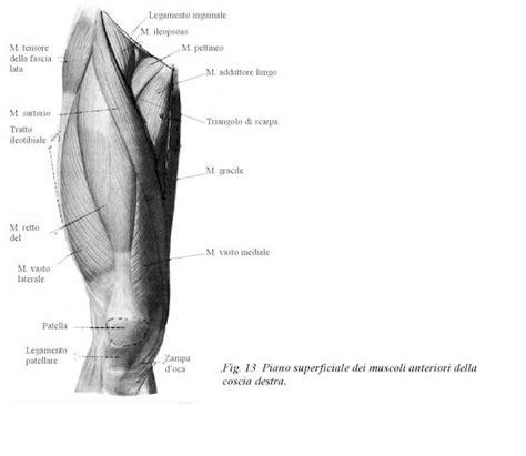dolore al ginocchio parte laterale interna rilascio miofasciale miofasciale