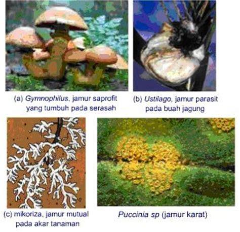 biologi pendahuluan