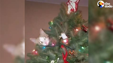 cats knocking over christmas trees youtube