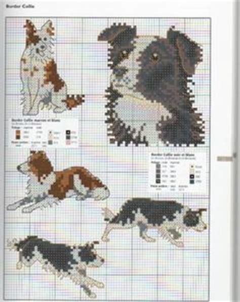 pattern white border collie border collie pattern chart