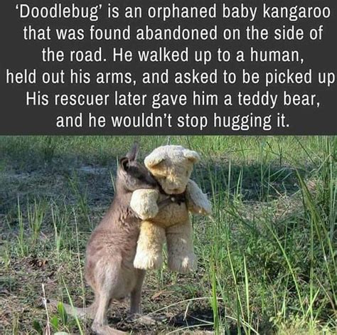 doodlebug the kangaroo 17 best ideas about random things on