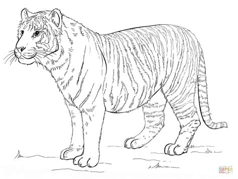 coloring pages siberian tiger sumatran tiger coloring download sumatran tiger coloring