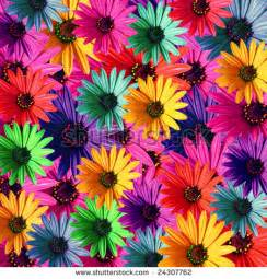 multi colored daisies royalty free stock photos and images multi colored