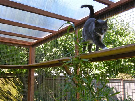 cat patio catio spaces diy catio plans and cat enclosures catios