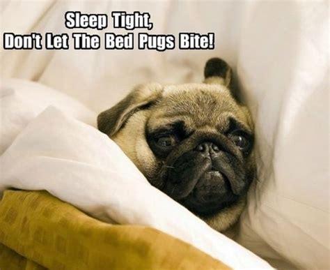 pug sleeping in bed sleep tight humor
