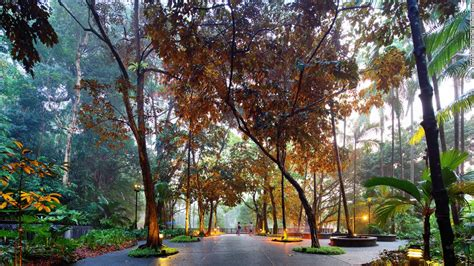 The Botanic Gardens Singapore Singapore Botanic Garden Unesco S Only Tropical Garden Cnn