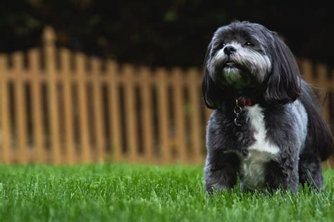 tips for housebreaking a puppy how to house a puppy