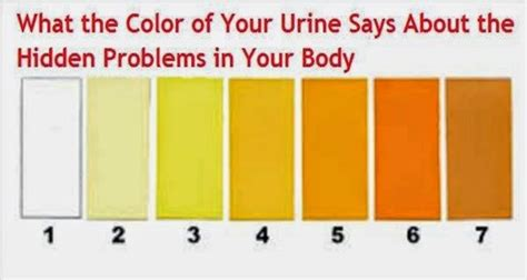 urine color meaning the meaning of urine color