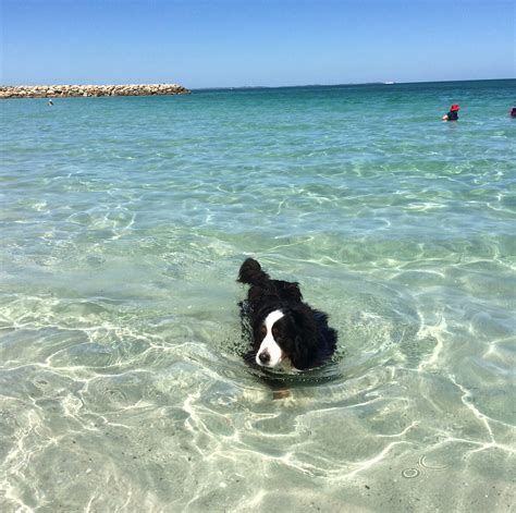 boat harbour dog beach the best dog beaches in perth so perth pups