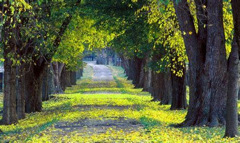 imagenes de paisajes y caminos fondo escritorio camino primaveral