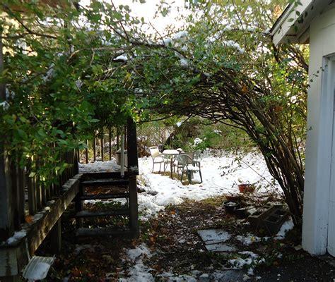 Description Of A Backyard File Backyard Arbor Bush Bending Like A Roof Jpg