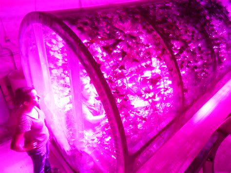 philips led grow light study finds philips led lights provide improved energy