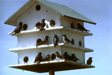 the size of martin birdhouse holes bird houses barn