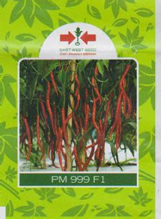 Bibit Cabe Santa 32 cabe keriting pm 999 bibit unggul