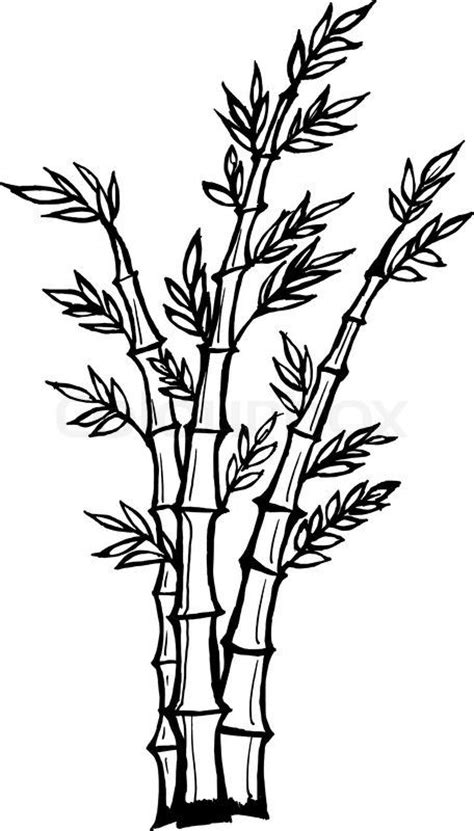 Drawing Of A Bamboo Tree by Bamboo Tree Drawing Stock Vector Of