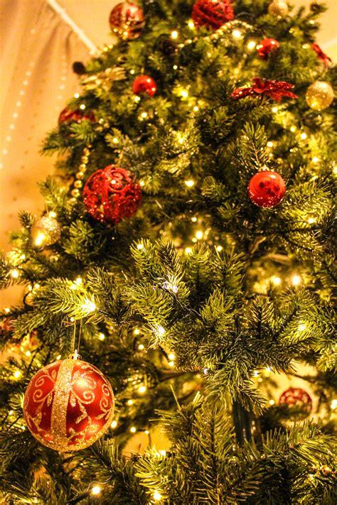 images branch blur celebration pine evergreen holiday hanging fir decor