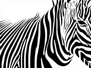 abstract zebra wallpaper black and white lines wallpaper vector and designs
