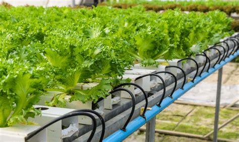 indoor garden technology hydroponics ota