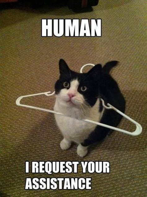 Funny Kitty Memes - 25 funny animal memes to make you laugh till you drop