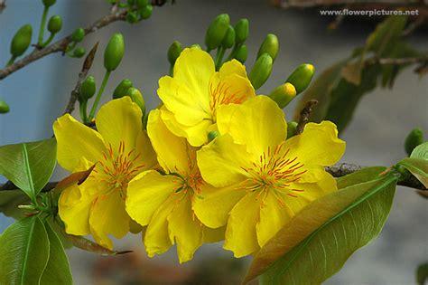 vietnamese spring flowers