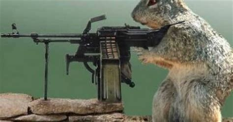 wallpapers funny animals  guns shooting