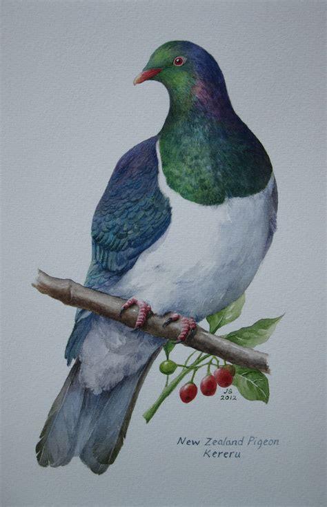 watercolor tattoo new zealand kereru nz wood pigeon watercolour 200x300mm bırds