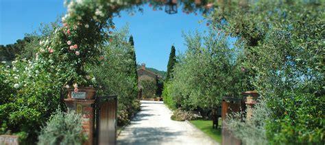 best italian olive the best italian olive lives at il fontanaro organic