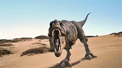 preguntas cultura general europa fm 5 curiosidades sobre el tiranosaurio rex que no conoc 237 as