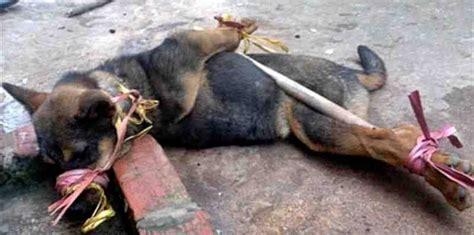 bali dogs butchered alivecreating animal awareness