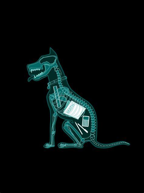 funhumor cool dog school dog  ray ipad iphone hd