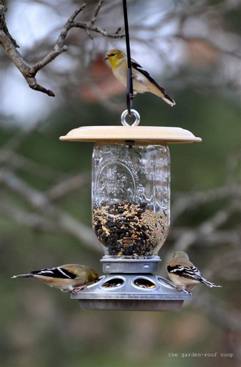 diy chick feeder bird feeders good for safflower but