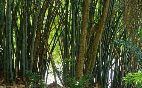 peradeniya botanical gardens the road to kandy peradeniya royal botanical gardens