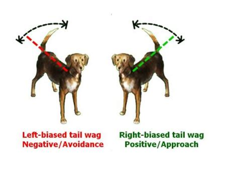 wagging meaning what a wagging really means new scientific data psychology today