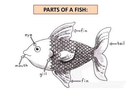 Part Of The parts of the fish