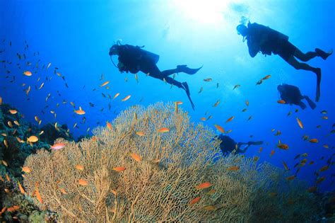 scuba diving in el nido philippines