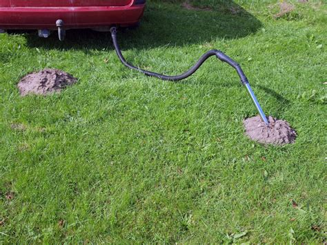 moles in backyard moles in yard amazing keep vols out of your yard with