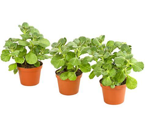pflanzen set garten dehner verpiss dich pflanze im set dehner garten center