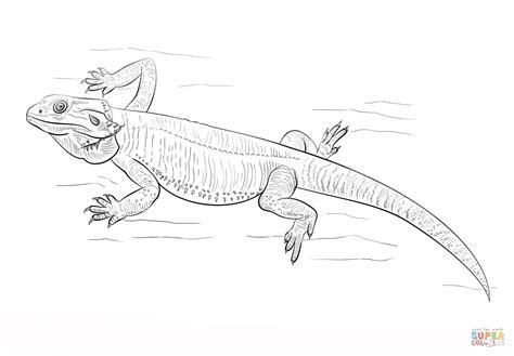 coloring page bearded dragon ausmalbild bartagame ausmalbilder kostenlos zum ausdrucken