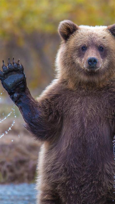 wallpaper bear  hd wallpaper  water national