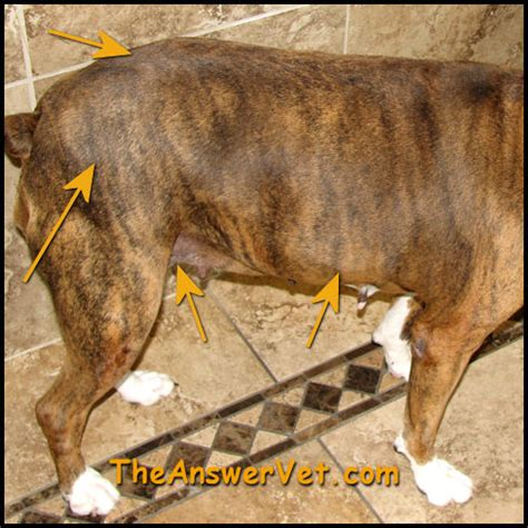 hypothyroidism in dogs view hypothyroidism in dogs and info on diagnosis and treatment