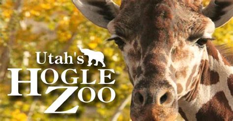 zoo lights hogle zoo coupons related keywords suggestions for hogle zoo