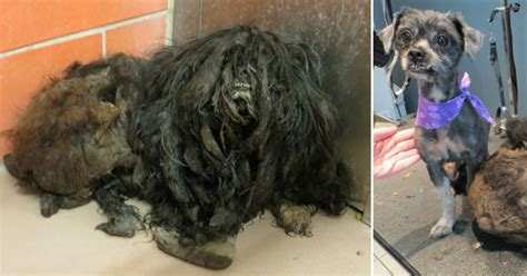 rescued transforms after 2 pounds of matted fur