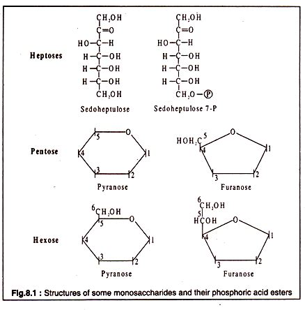 structures o carbohydrates molecular structure of carbohydrates with diagram