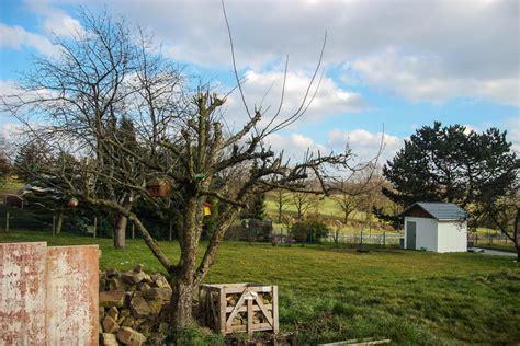 apfelbaum im garten apfelbaum im garten schneiden selber machen gartenblog