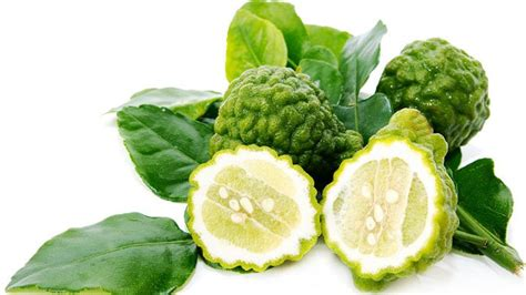 Benihbibitbiji Buah Jeruk Ponkam 11 manfaat dan khasiat kulit jeruk purut untuk kesehatan khasiat