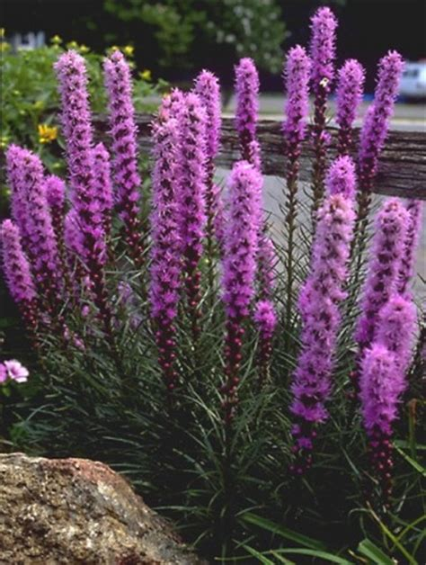 fiori estivi per aiuole mobili lavelli fiori perenni per aiuole