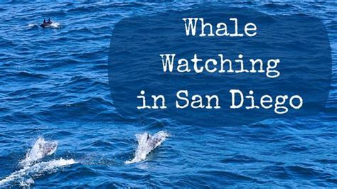 living on a boat in san diego whale watching in san diego maria abroad