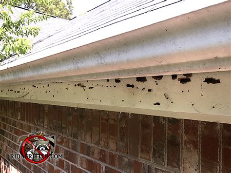 carpenter bee house carpenter bee removal and damage repair atlanta