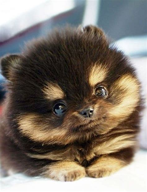 puppy find 25 best images about puppy on boo puppy hopscotch and pet puppy
